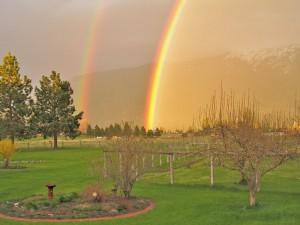 Rainbows 1900x1425888x600